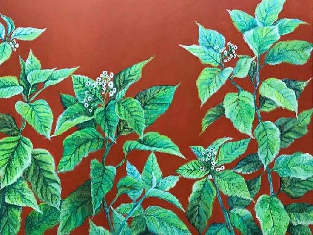 Shirin Watwani - Blooming Lettuce Tree